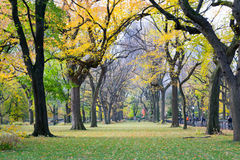 Θόλος των αμερικανικών λευκών στο Central Park στοκ φωτογραφία με δικαίωμα ελεύθερης χρήσης