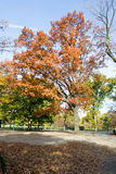Θόλος των αμερικανικών λευκών στο Central Park στοκ φωτογραφίες