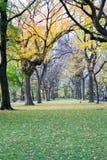 Θόλος των αμερικανικών λευκών στο Central Park στοκ εικόνες με δικαίωμα ελεύθερης χρήσης