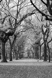 Θόλος των αμερικανικών λευκών στο Central Park στοκ εικόνα με δικαίωμα ελεύθερης χρήσης