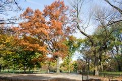 Θόλος των αμερικανικών λευκών στο Central Park στοκ εικόνες