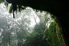 θύελλα ζουγκλών στοκ εικόνες με δικαίωμα ελεύθερης χρήσης