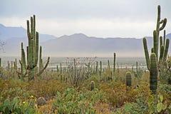 Θύελλα σκόνης κοντά στο εθνικό πάρκο Saguaro Στοκ φωτογραφία με δικαίωμα ελεύθερης χρήσης