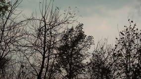 Θύελλα στο teak δάσος σε θερινή περίοδο απόθεμα βίντεο