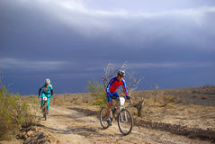 θύελλα φυλών ερήμων ποδη&lamb Στοκ φωτογραφία με δικαίωμα ελεύθερης χρήσης