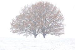 θύελλα χιονιού Στοκ Φωτογραφίες