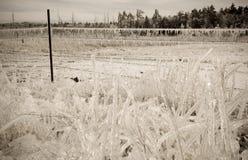 Θύελλα πάγου Στοκ Φωτογραφίες