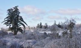 Θύελλα πάγου Στοκ Εικόνα