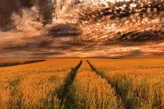 Θύελλα πέρα από cornfields Στοκ εικόνα με δικαίωμα ελεύθερης χρήσης