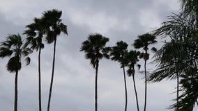 Θύελλα φοινίκων Στοκ Φωτογραφία