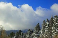 Θύελλα χιονιού στο δάσος στοκ εικόνες