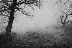 Θλιβερός κήπος άνοιξη Στοκ εικόνες με δικαίωμα ελεύθερης χρήσης