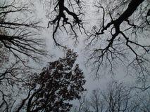 Θλιβερός ουρανός με τα δέντρα Στοκ Φωτογραφία