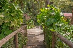 Διάβαση πεζών στο πάρκο της Γουαδελούπης Στοκ Φωτογραφία