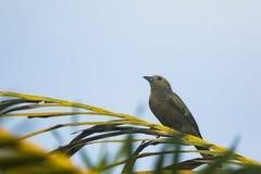 διάνυσμα δέντρων απεικόνισης κλάδων πουλιών Στοκ Εικόνες