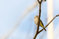 διάνυσμα δέντρων απεικόνισης κλάδων πουλιών Στοκ Φωτογραφία