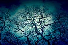 διάνυσμα δέντρων απεικόνισης πουλιών Στοκ φωτογραφία με δικαίωμα ελεύθερης χρήσης