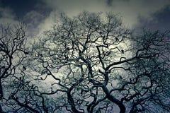 διάνυσμα δέντρων απεικόνισης πουλιών Στοκ φωτογραφίες με δικαίωμα ελεύθερης χρήσης