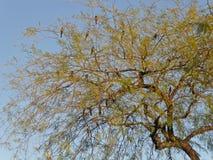 διάνυσμα δέντρων απεικόνισης πουλιών Στοκ Φωτογραφίες