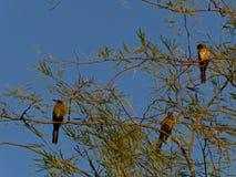 διάνυσμα δέντρων απεικόνισης πουλιών Στοκ εικόνες με δικαίωμα ελεύθερης χρήσης