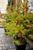 διάνυσμα δέντρων απεικόνισης χαιρετισμού Χριστουγέννων eps10 καρτών Στοκ Εικόνα