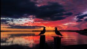 διάνυσμα αγάπης απεικόνισης πουλιών Στοκ εικόνα με δικαίωμα ελεύθερης χρήσης