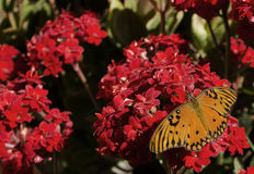 διάνυσμα απεικόνισης λουλουδιών πεταλούδων Στοκ εικόνες με δικαίωμα ελεύθερης χρήσης
