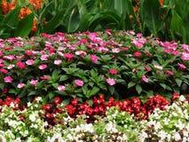 διάνυσμα απεικόνισης λουλουδιών σύνθεσης Στοκ φωτογραφία με δικαίωμα ελεύθερης χρήσης