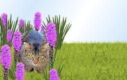 διάνυσμα απεικόνισης 10 eps γατών λουλουδιών Στοκ φωτογραφία με δικαίωμα ελεύθερης χρήσης