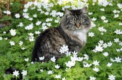 διάνυσμα απεικόνισης 10 eps γατών λουλουδιών Στοκ Εικόνες