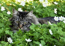διάνυσμα απεικόνισης 10 eps γατών λουλουδιών Στοκ Φωτογραφίες