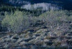 διάνυσμα 8 αφηρημένο eps φύλλων απεικόνισης Στοκ Εικόνες