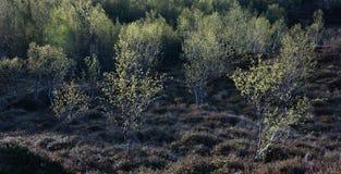 διάνυσμα 8 αφηρημένο eps φύλλων απεικόνισης Στοκ εικόνα με δικαίωμα ελεύθερης χρήσης