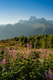 διάνυσμα βουνών τοπίων απεικόνισης λουλουδιών Στοκ Εικόνες