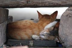 διάνυσμα γατακιών απεικόνισης γατών Στοκ φωτογραφία με δικαίωμα ελεύθερης χρήσης