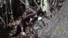 διάνυσμα γατακιών απεικόνισης γατών απόθεμα βίντεο