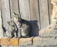 διάνυσμα γατακιών απεικόνισης γατών Στοκ Φωτογραφία