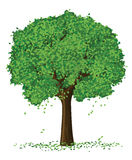 διάνυσμα θερινών δέντρων σ&kappa Στοκ εικόνα με δικαίωμα ελεύθερης χρήσης