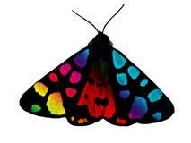 διάνυσμα ουράνιων τόξων απεικόνισης πεταλούδων Στοκ εικόνες με δικαίωμα ελεύθερης χρήσης