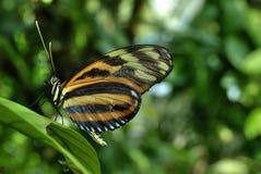 διάνυσμα ουράνιων τόξων απεικόνισης πεταλούδων Στοκ φωτογραφία με δικαίωμα ελεύθερης χρήσης