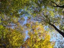 διάνυσμα ουρανού φύλλων Στοκ εικόνα με δικαίωμα ελεύθερης χρήσης