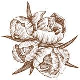 διάνυσμα λουλουδιών ελεύθερη απεικόνιση δικαιώματος
