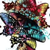 Διάνυσμα πεταλούδων μόδας Στοκ εικόνα με δικαίωμα ελεύθερης χρήσης