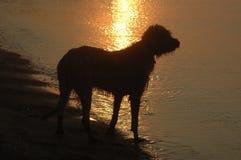 διάνυσμα σκιαγραφιών σκυλιών ανασκόπησης grunge Στοκ εικόνα με δικαίωμα ελεύθερης χρήσης
