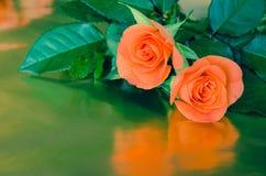 διάνυσμα τριαντάφυλλων απεικόνισης χαιρετισμού καρτών Στοκ Εικόνες