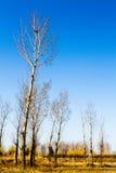 διάφορα δέντρα στα περίχωρα Στοκ φωτογραφίες με δικαίωμα ελεύθερης χρήσης