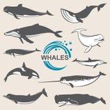 Διάφορες φάλαινες καθορισμένες Στοκ φωτογραφία με δικαίωμα ελεύθερης χρήσης