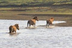Διαγώνιος ποταμός αλόγων Στοκ φωτογραφίες με δικαίωμα ελεύθερης χρήσης