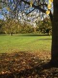 διαθέσιμο διάνυσμα δέντρων απεικόνισης φθινοπώρου Στοκ εικόνα με δικαίωμα ελεύθερης χρήσης