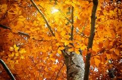 διαθέσιμο διάνυσμα δέντρων απεικόνισης φθινοπώρου Στοκ εικόνες με δικαίωμα ελεύθερης χρήσης